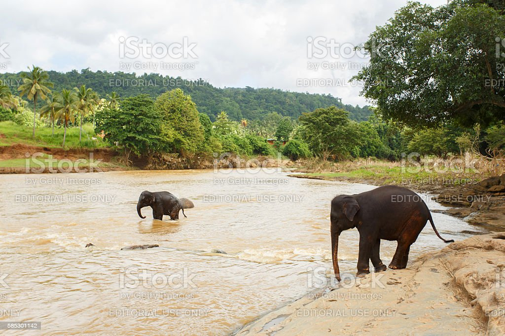 Pinnawala Elephant Orphanage 1 June 2016 stock photo