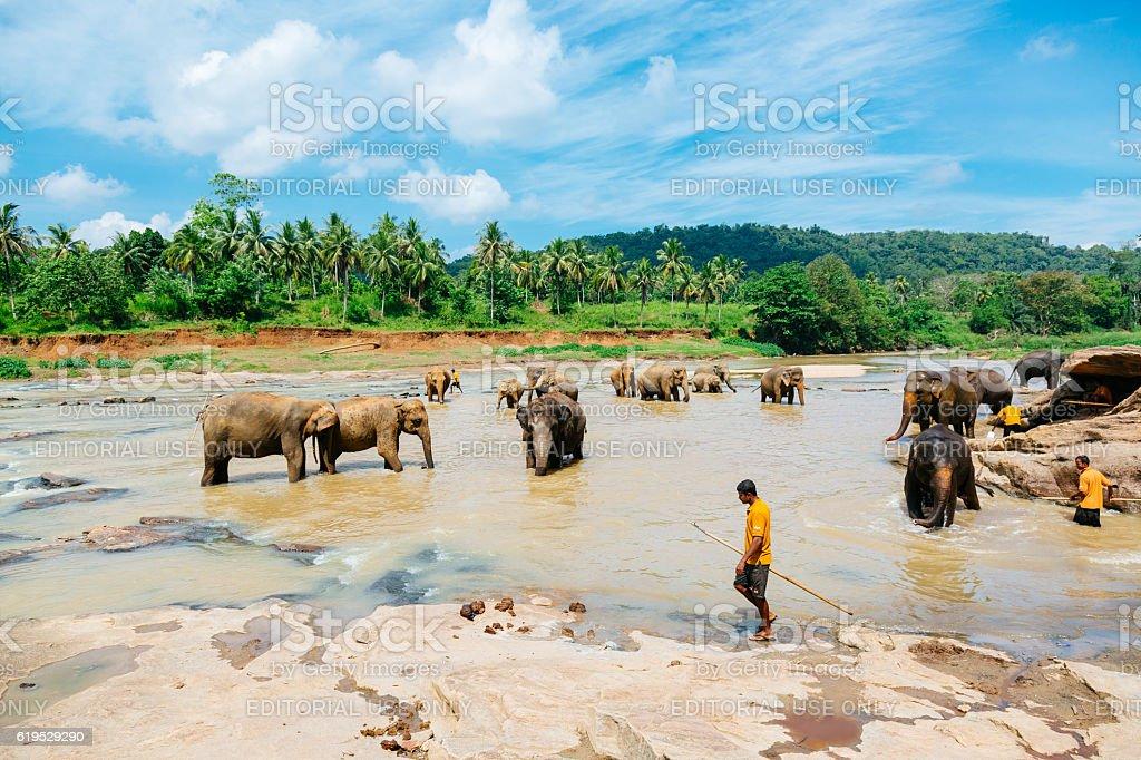Pinnawala elephant orphanage, Sri Lanka. stock photo