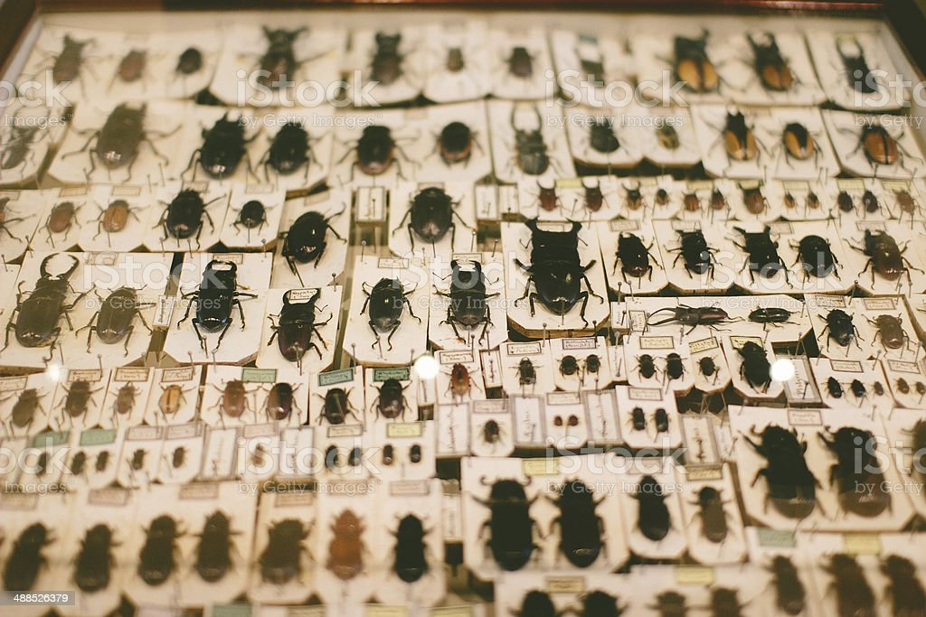 Pinned and preserved insects. stock photo