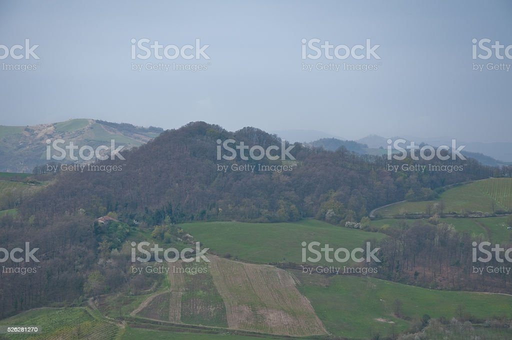 pinot noir vineyard located Oltrepo Pavese stock photo
