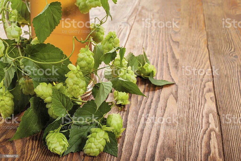 Pint and hop plant royalty-free stock photo