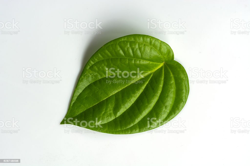 Piper betle leaf on white background stock photo