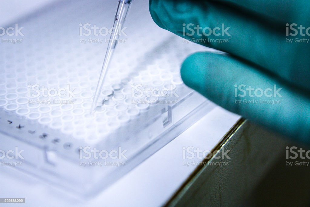 Pipette Injecting into 384 Well Plate for Genetic Scientific Research stock photo