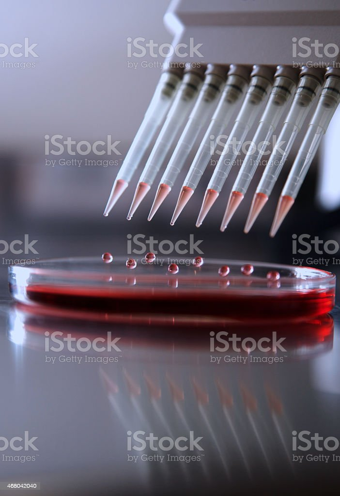 pipette injecting liquid into a plate stock photo
