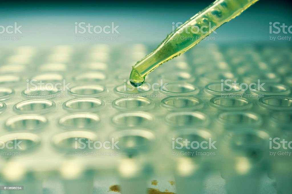 Pipette with a drop of Zika Virus Research Cell stock photo