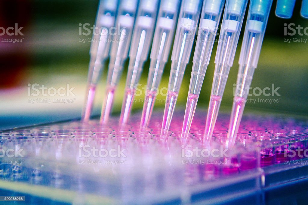 Pipette With Cell Culture Plate. stock photo