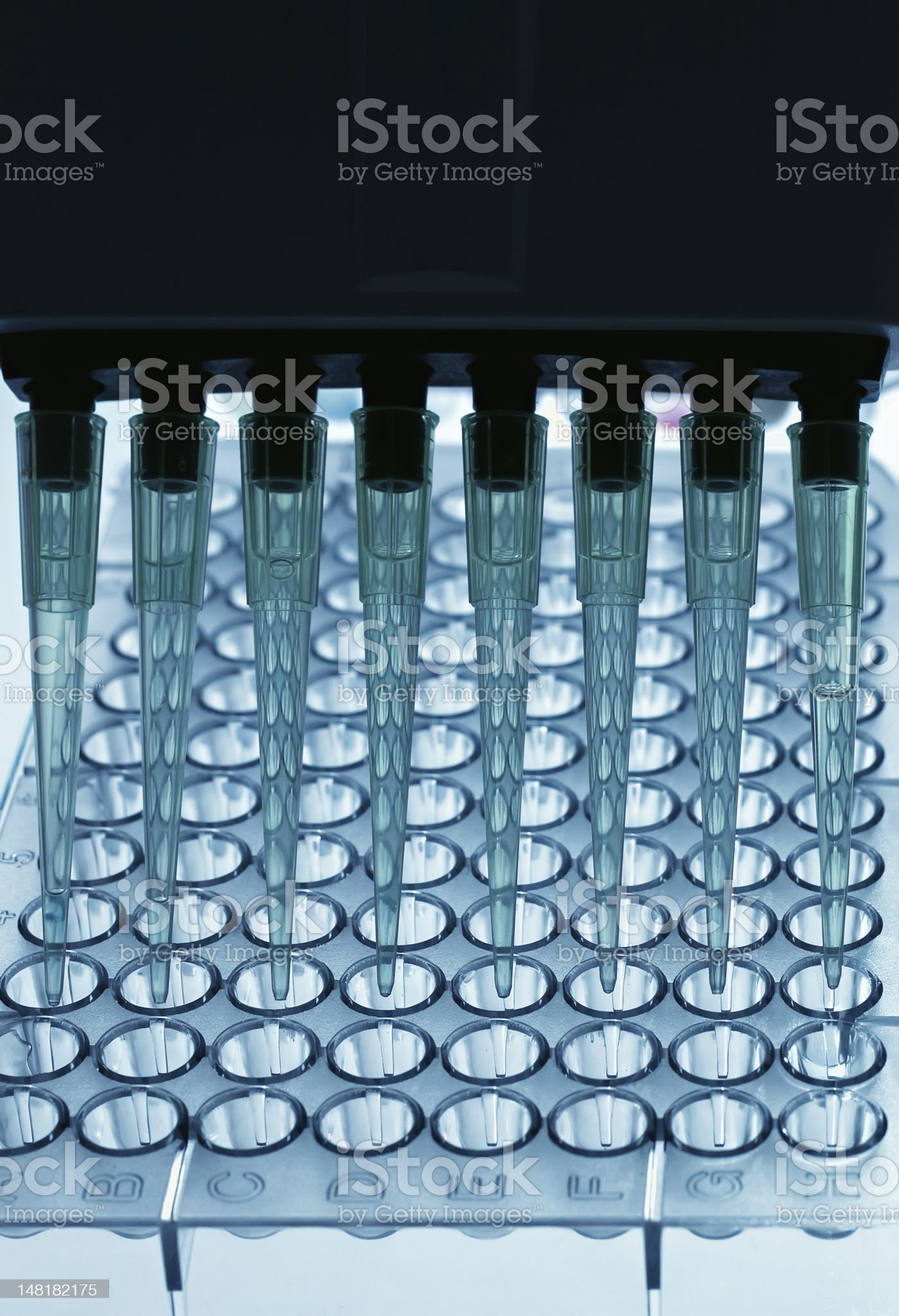 Pipetting samples in a plate royalty-free stock photo