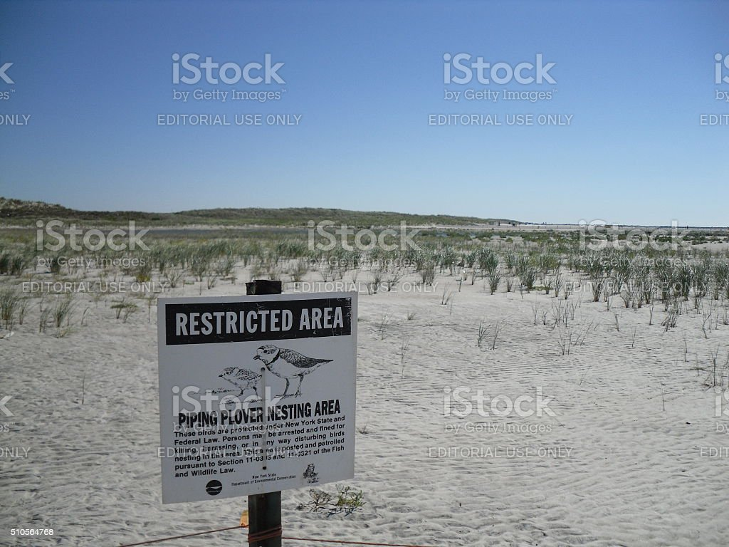 Piping Plover Nesting Area Sign in Sand Dunes. stock photo