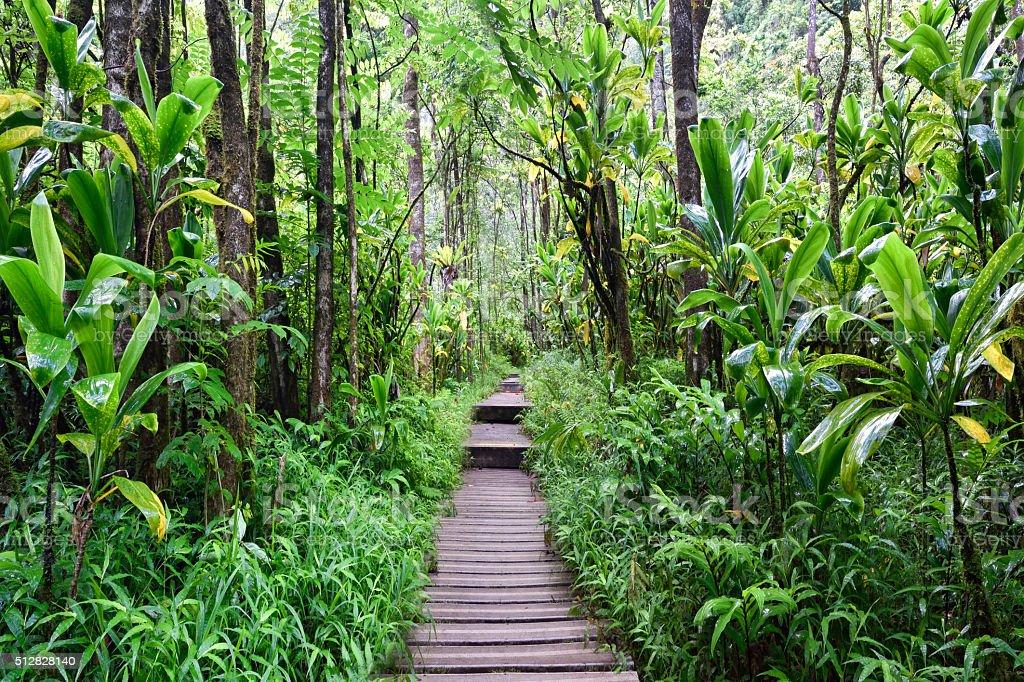 Pipiwai trail, Kipahulu state park, Maui, Hawaii stock photo