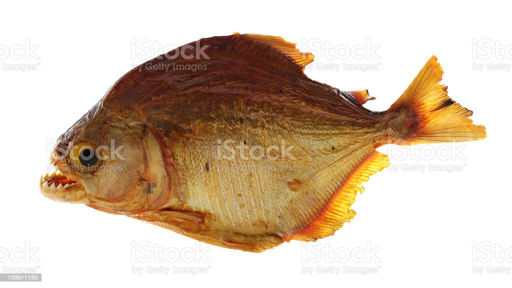 Piranha (perfectly isolated on white) stock photo