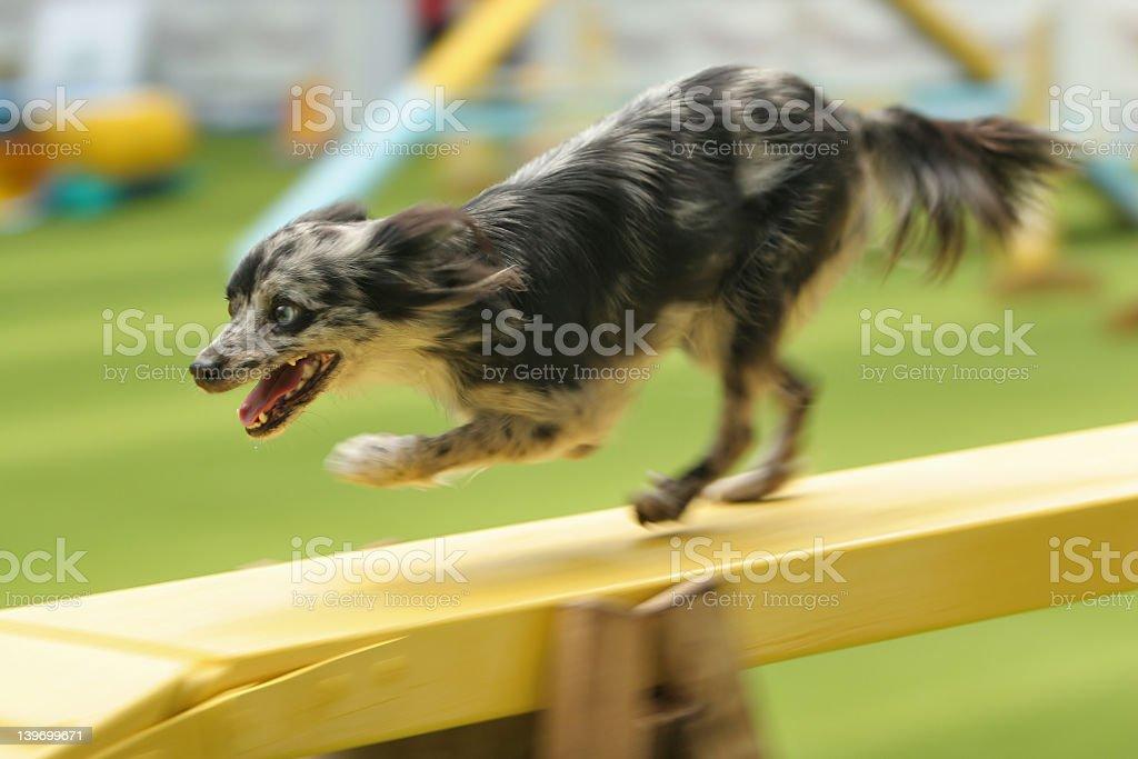 Pirenean shepherd on a bridge stock photo