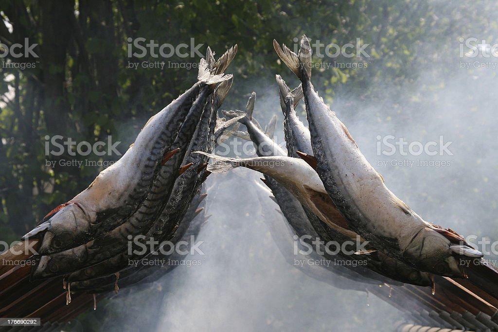 fische stock photo