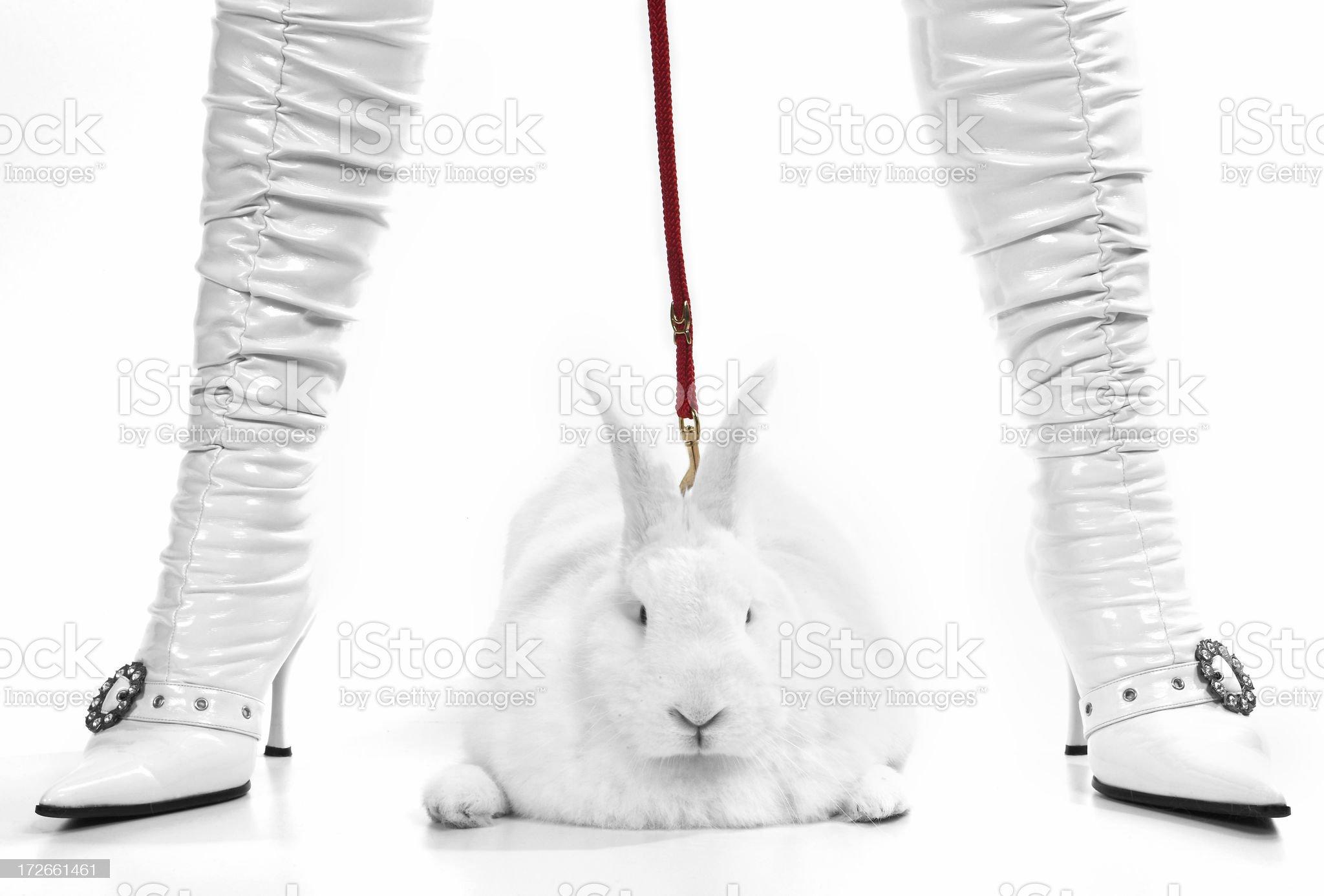 Pit Bull Bunny royalty-free stock photo
