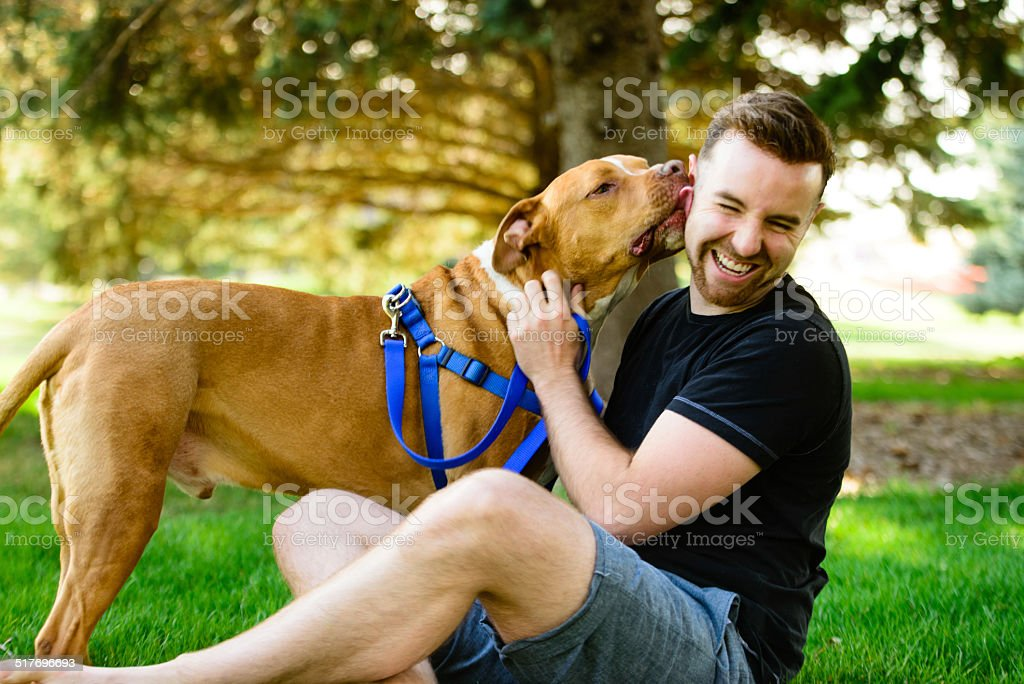 PItbull Kiss stock photo