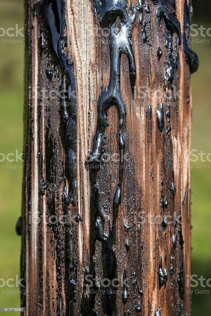 Pitch at a wooden post royalty-free stock photo