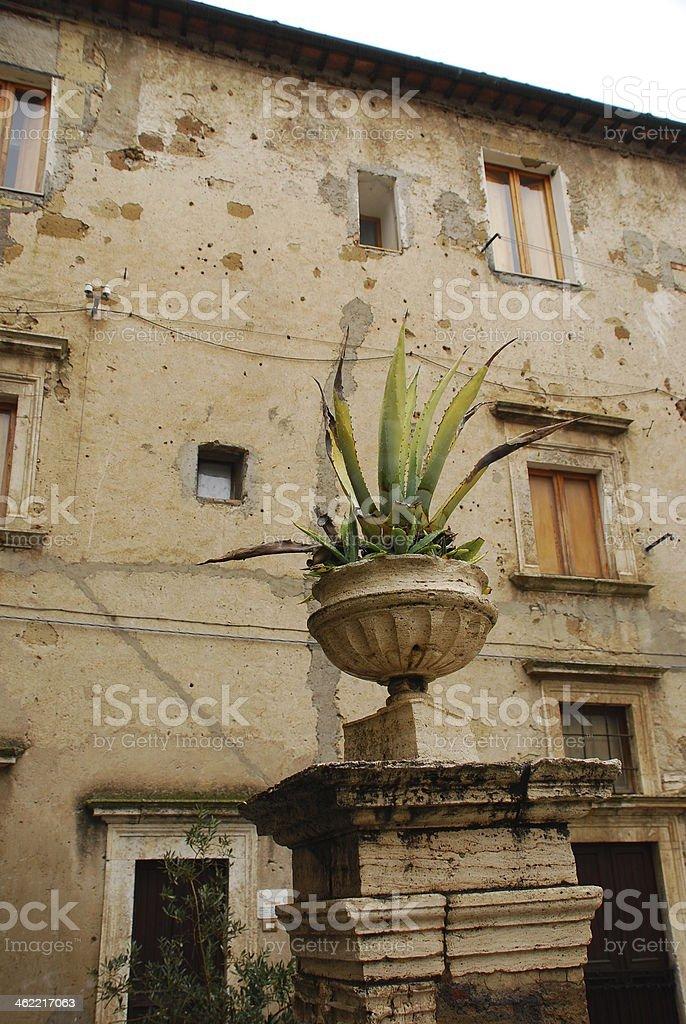 Pitigliano Plant stock photo
