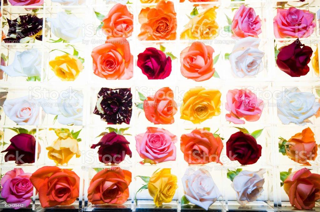 Pitti immagine fairtrade stock photo