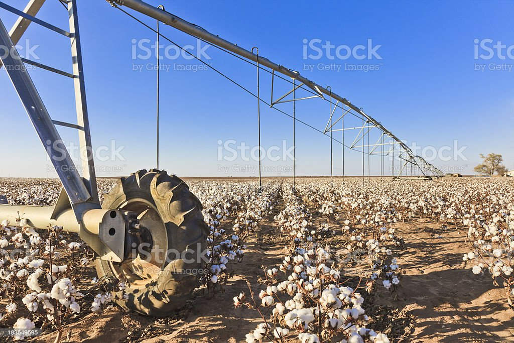 pivot circle irrigation equipment in cotton field stock photo