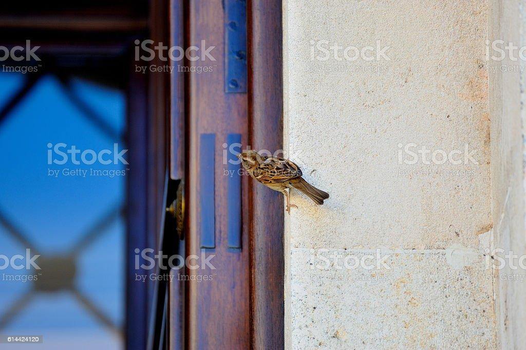 pájaro en la puerta royalty-free stock photo
