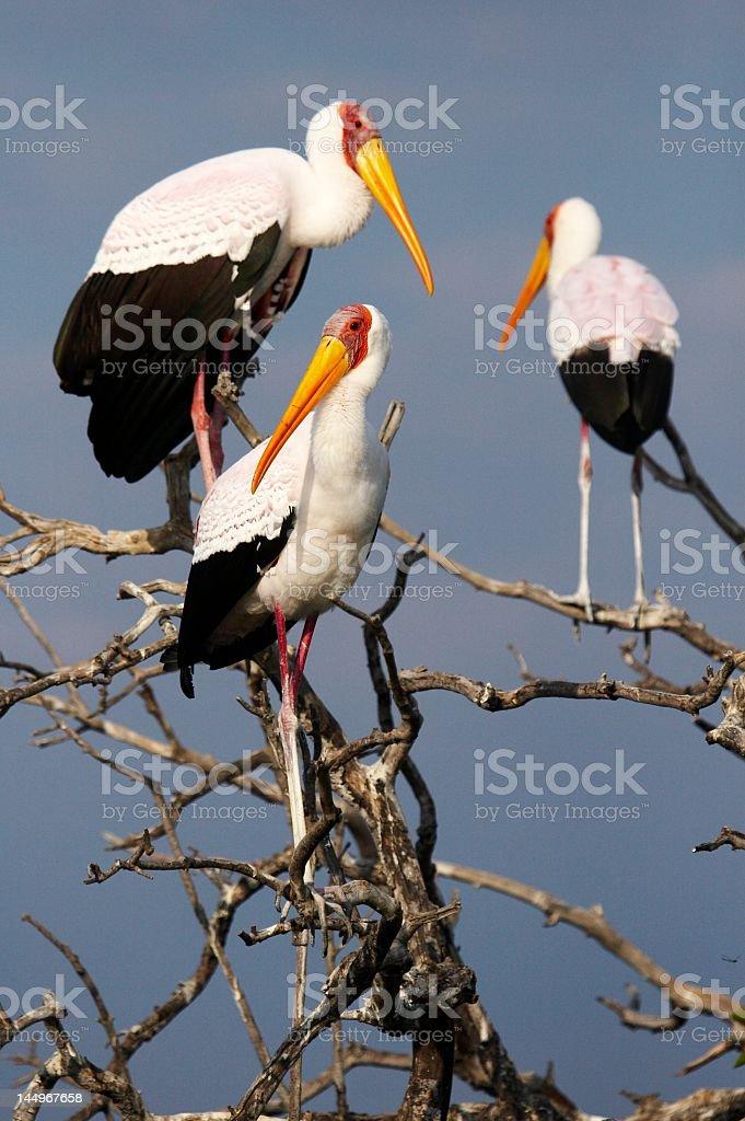 Pájaros en África stock photo