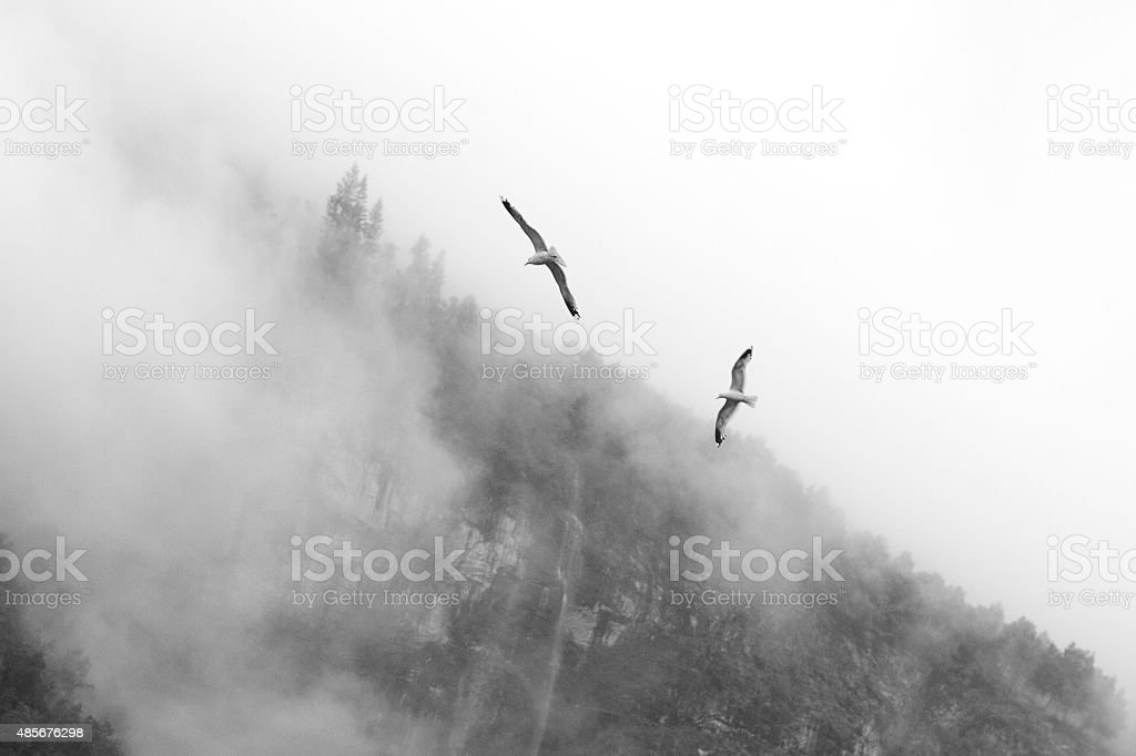 Pájaros en la niebla zbiór zdjęć royalty-free
