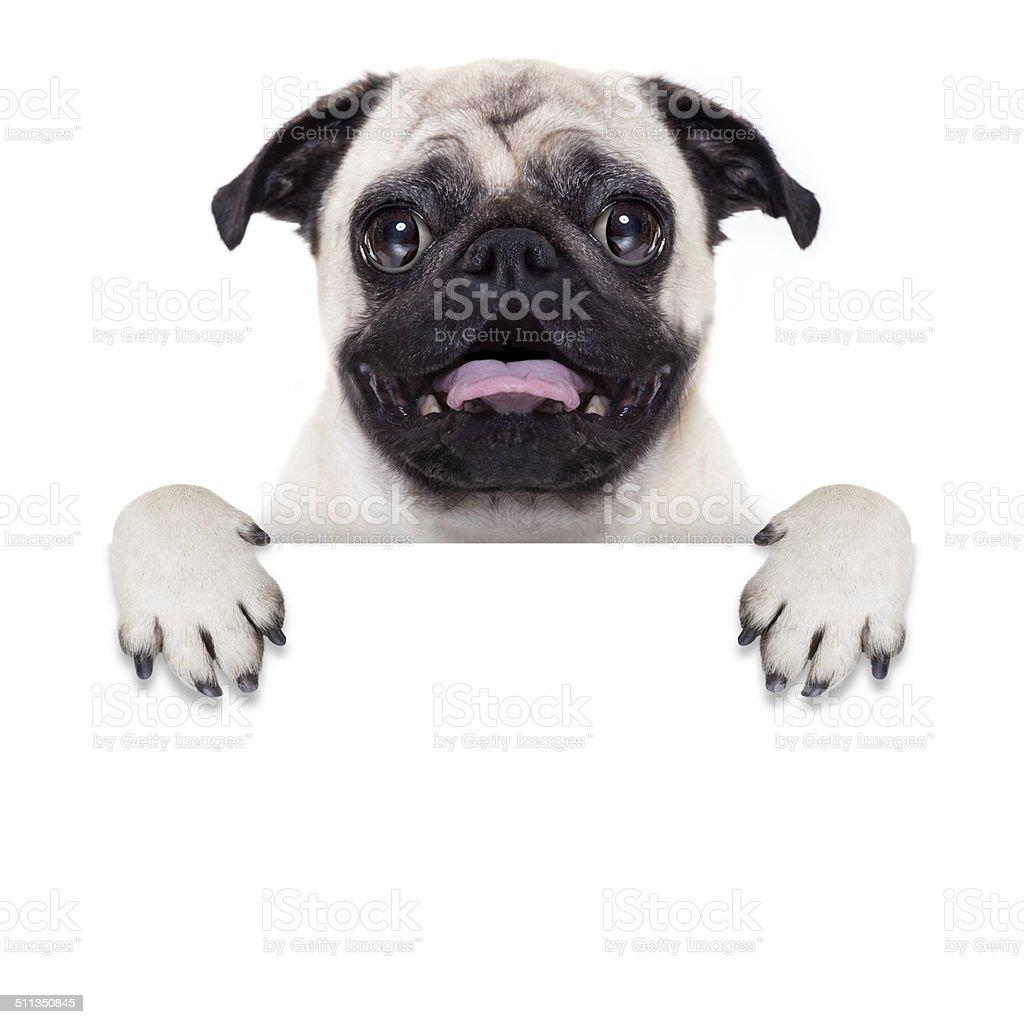 placard banner dog stock photo