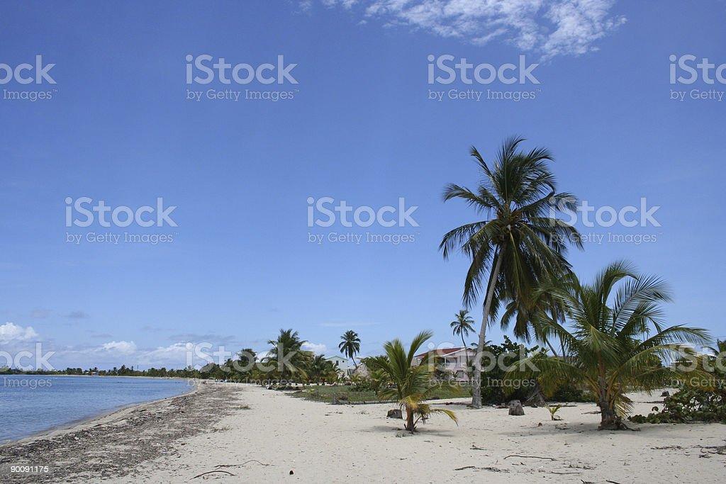 placencia beachline stock photo
