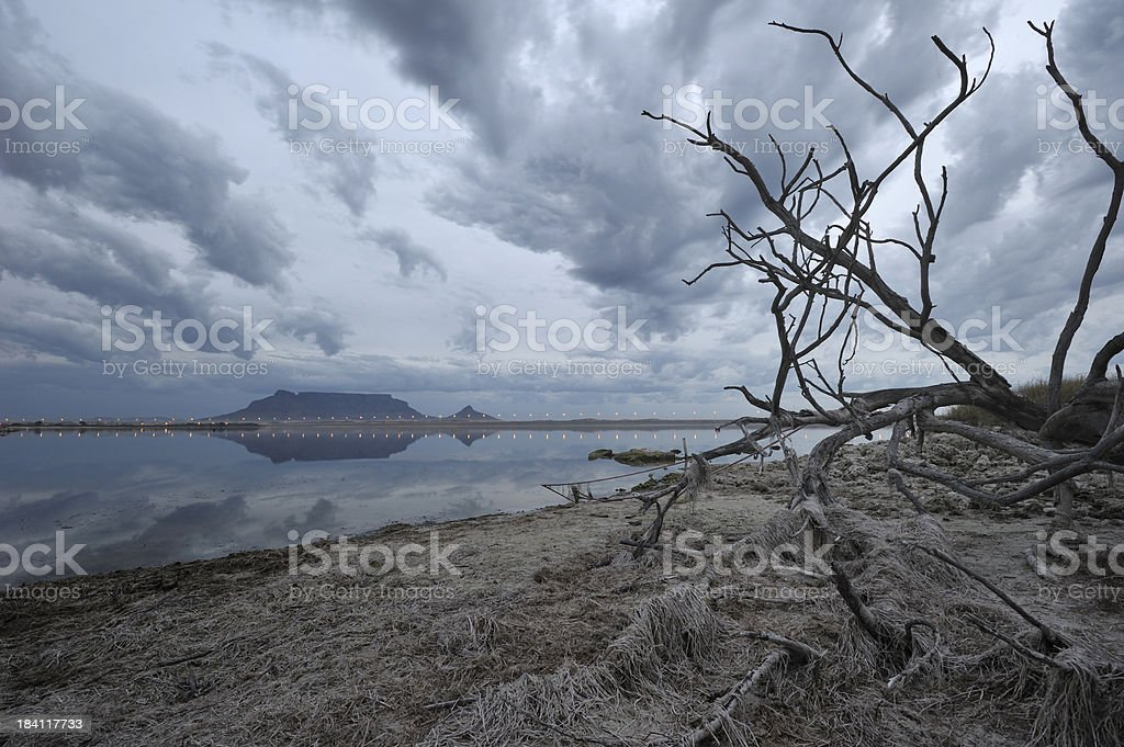 Placid lake with dead tree stock photo