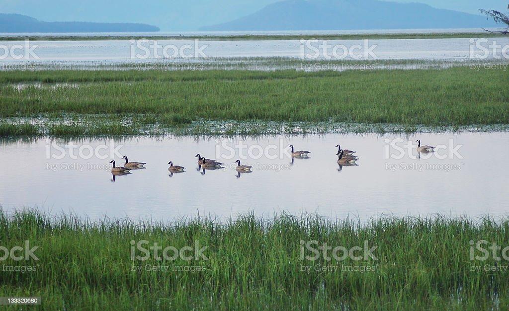 Jezioro Placid z Gęsi zbiór zdjęć royalty-free