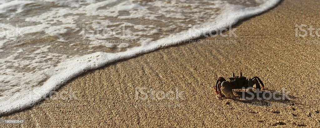 plage, beach, sand royalty-free stock photo