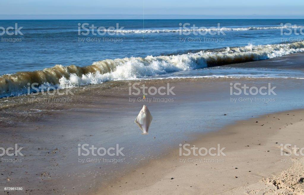 plaice on fishing rod stock photo