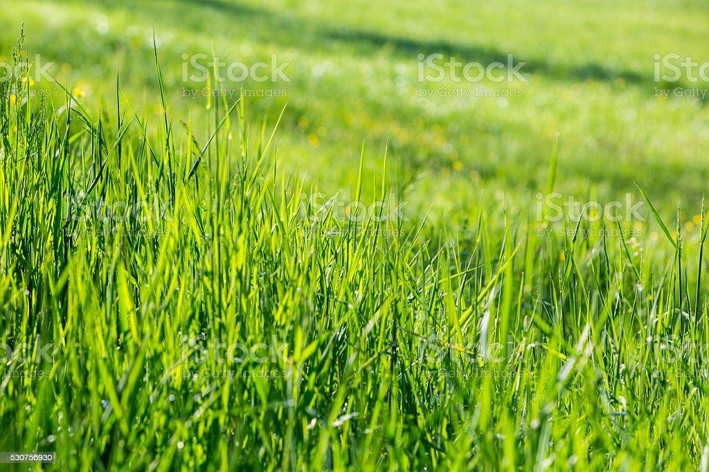 Plain green meadow stock photo