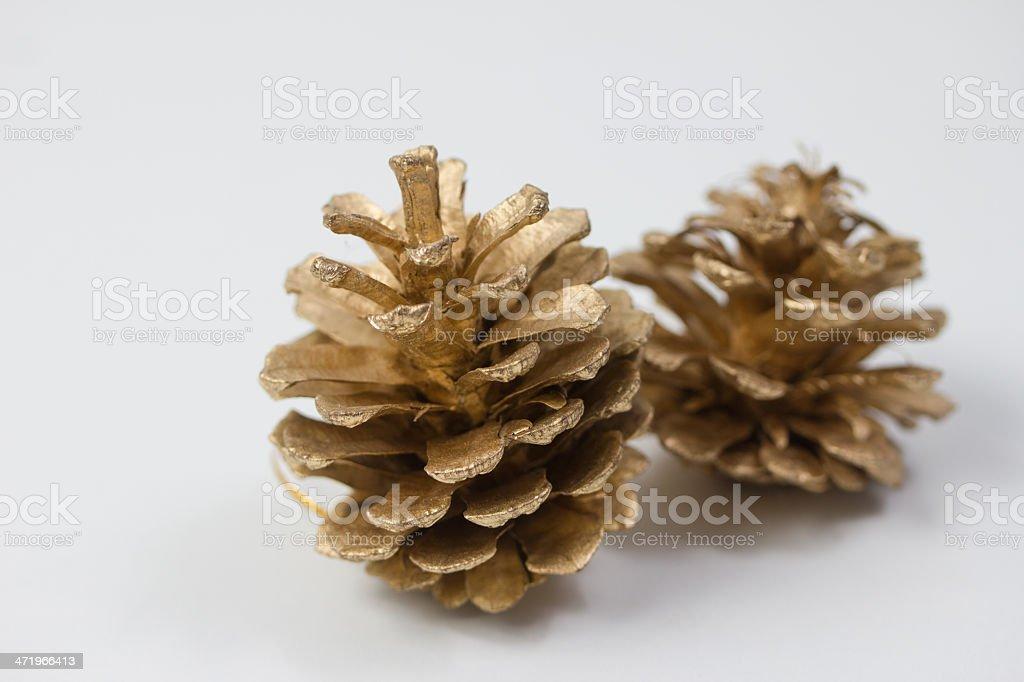 plain isolated pine cones stock photo