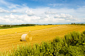 plain of yellow wheat straw
