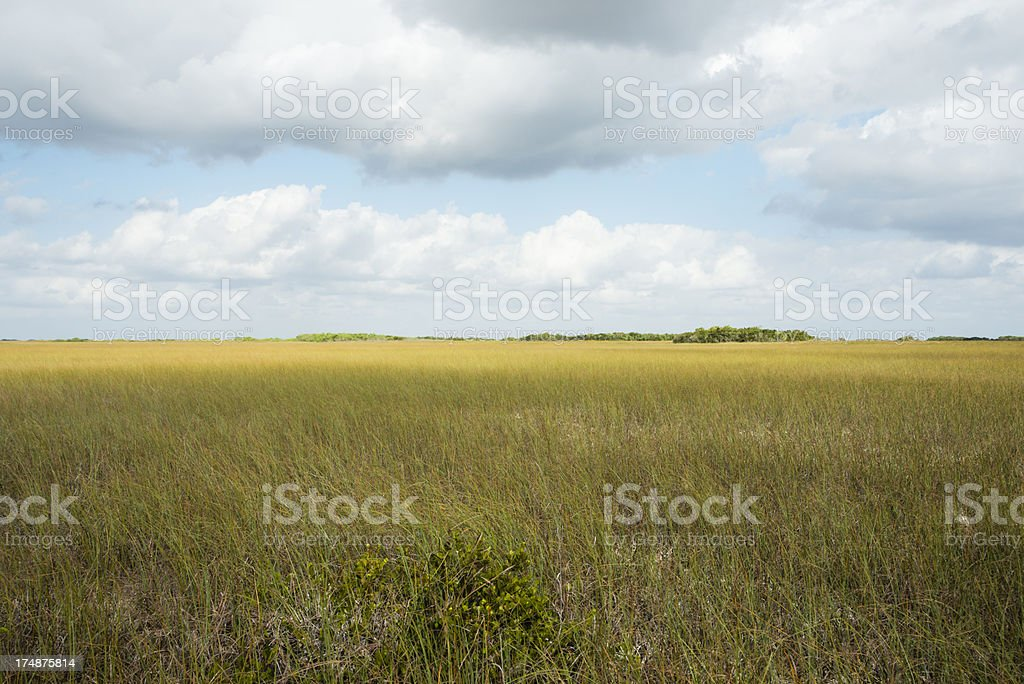 Plains of  the Everglades royalty-free stock photo