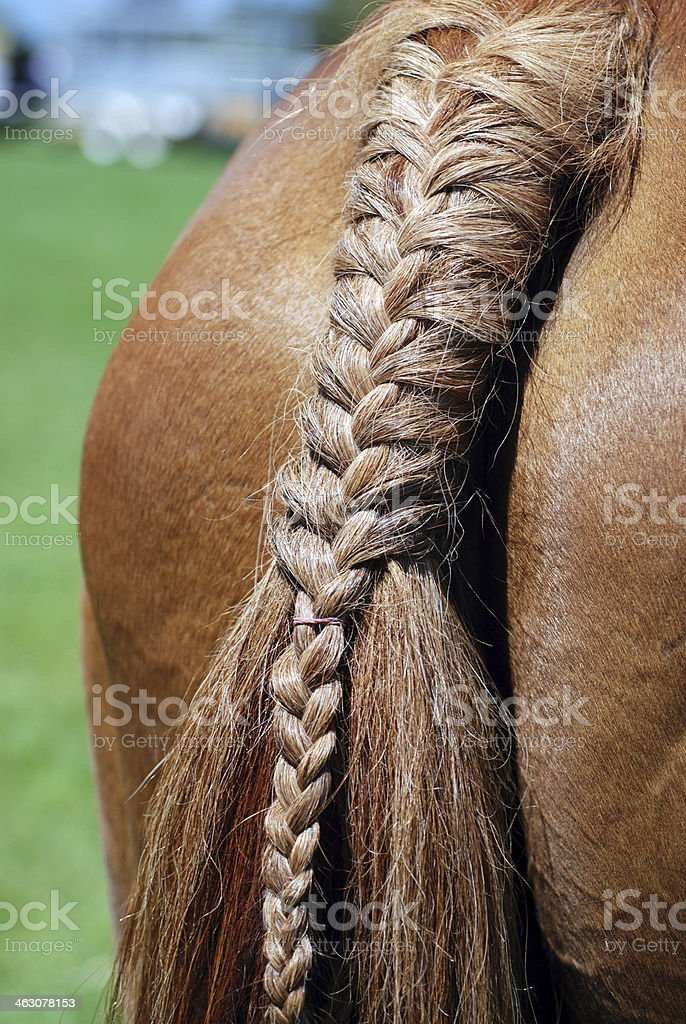 Plaited Horse Tail stock photo