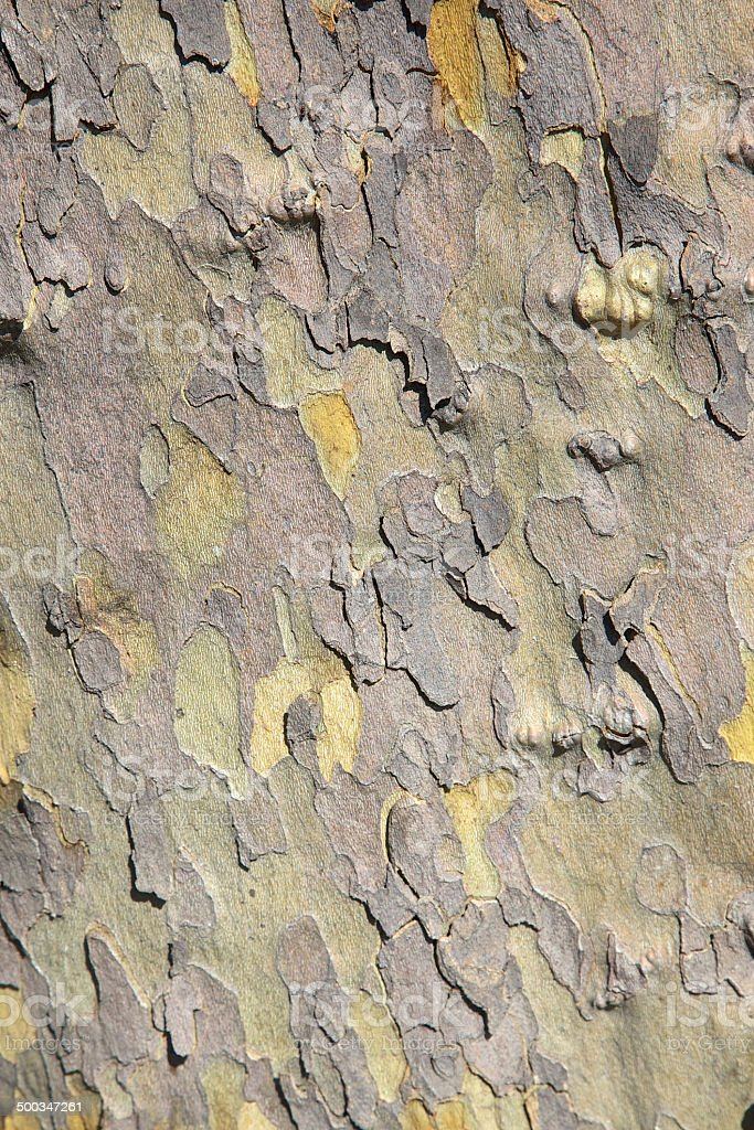 Plane Tree Bark stock photo