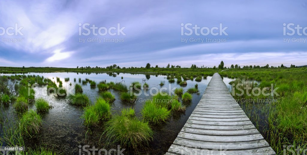 Planks leading through a swamp over a pond in sunset stock photo