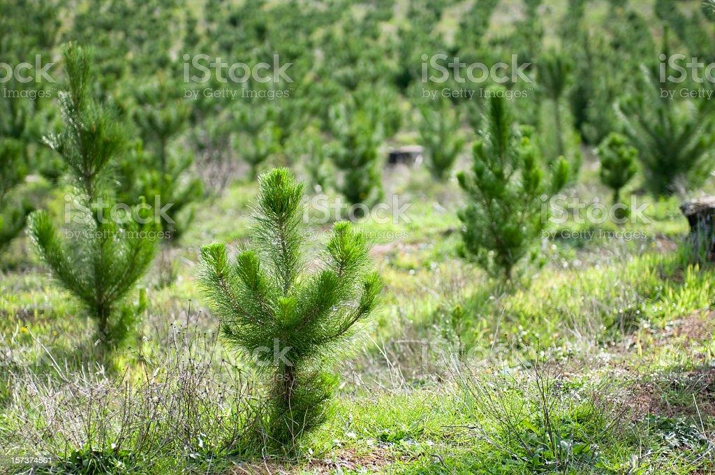 Plant a Tree royalty-free stock photo