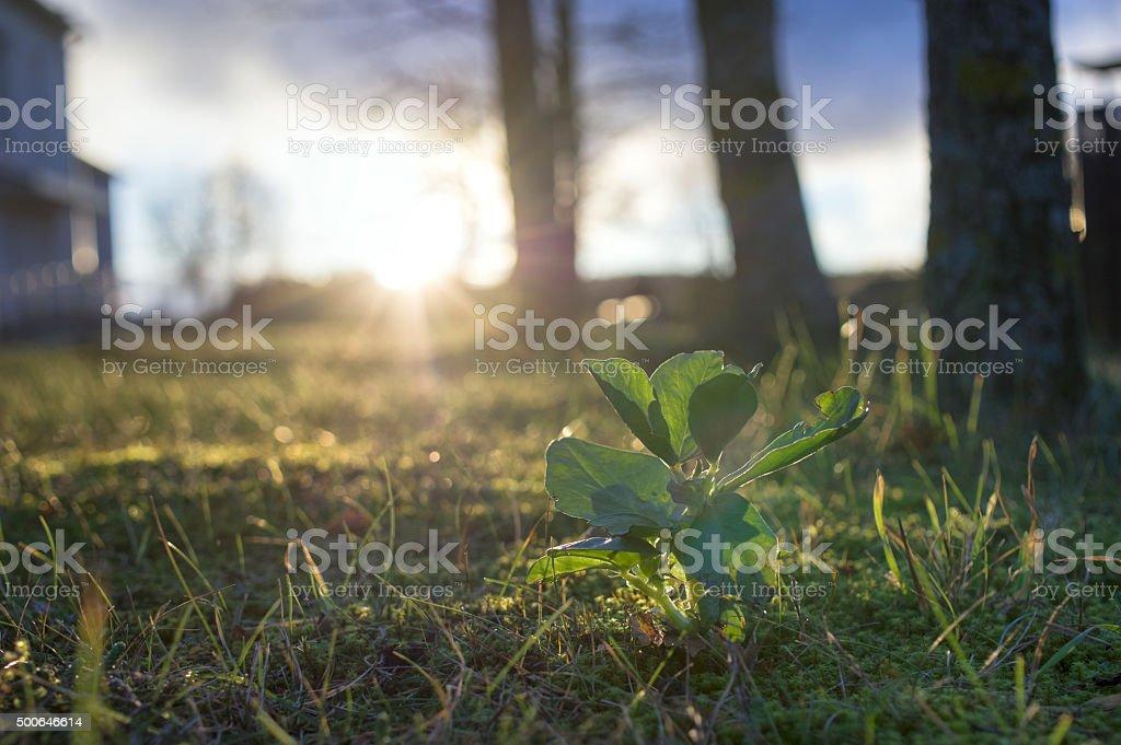 Plant Against Sun stock photo