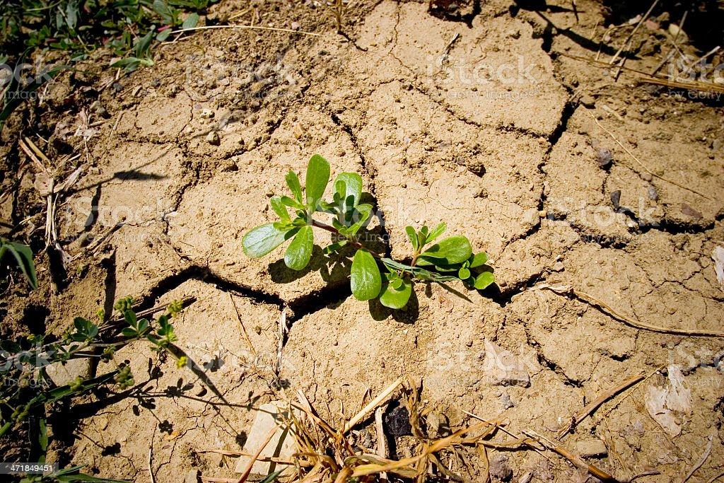 Plant and aridity stock photo