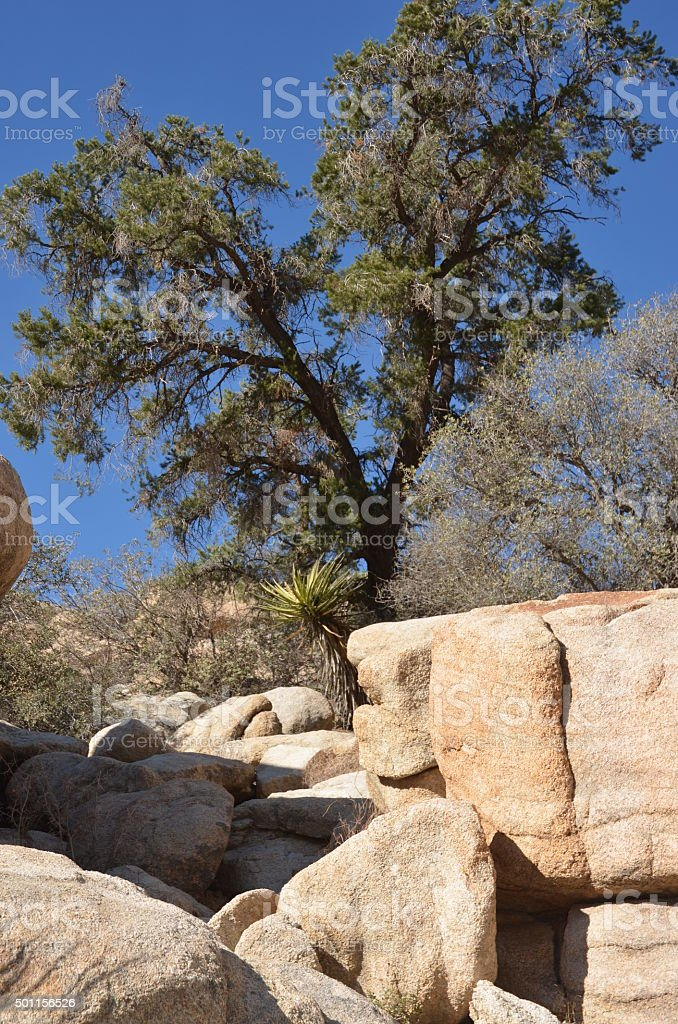 Plant and Boulder Filled Landscape in Joshua Tree National Park royalty-free stock photo