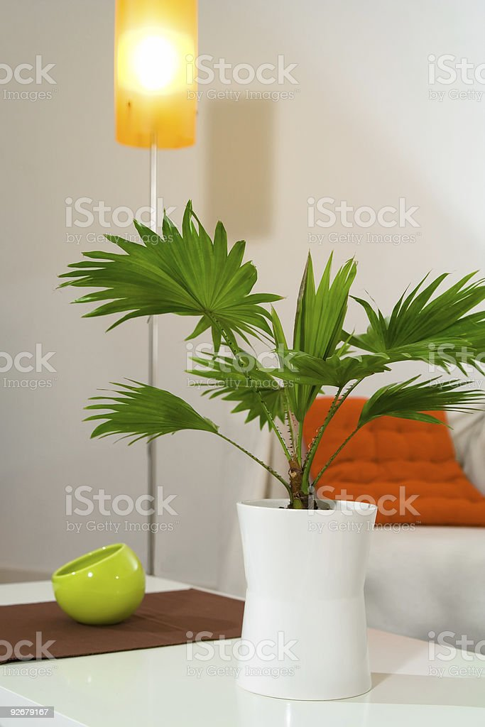 Plant and bowl royalty-free stock photo