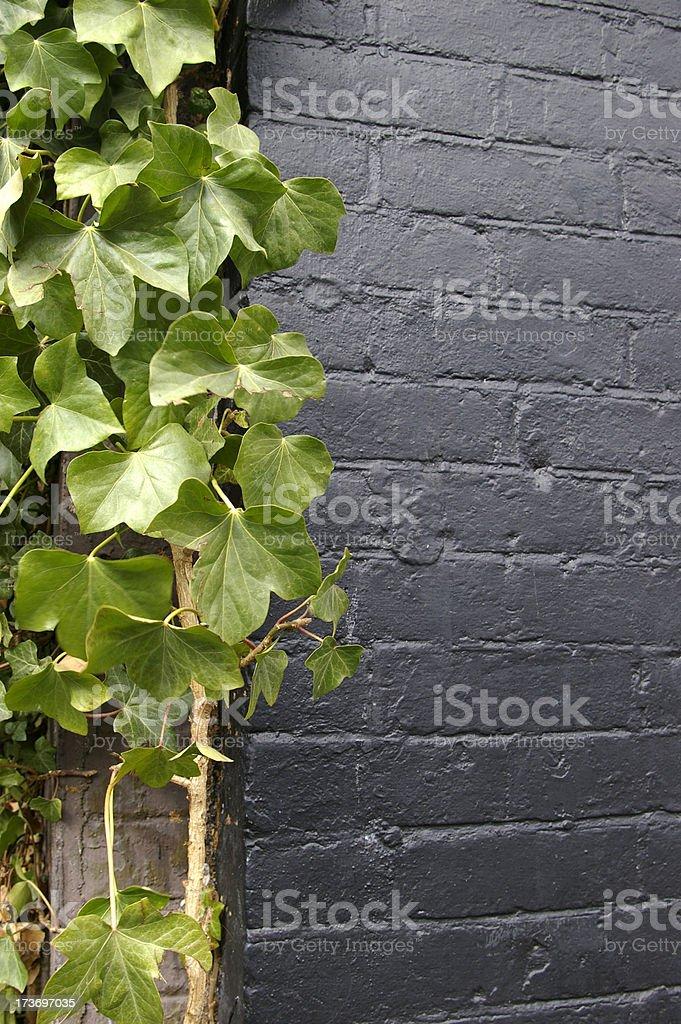 Plant and Brick stock photo