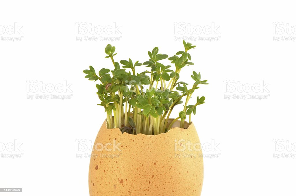 plant and  egg stock photo