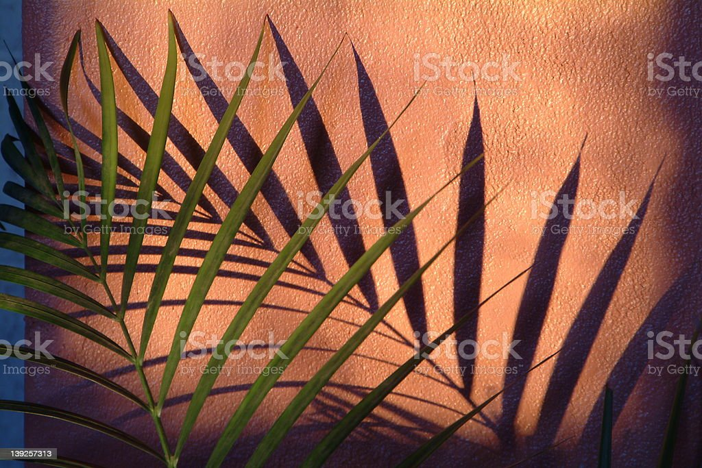 Plant and Shadow royalty-free stock photo