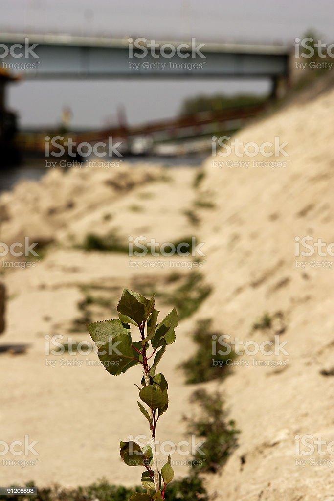 Plant at a shore royalty-free stock photo
