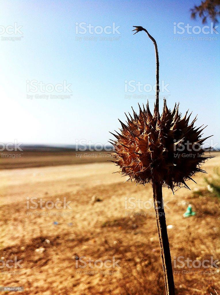 Plant at beach stock photo