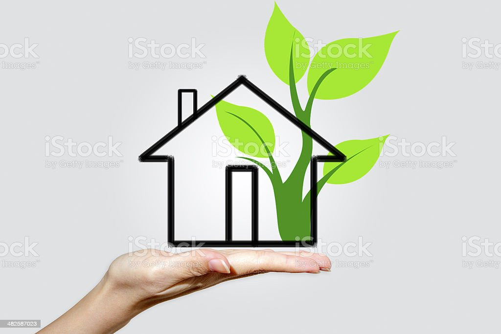Plant at House stock photo
