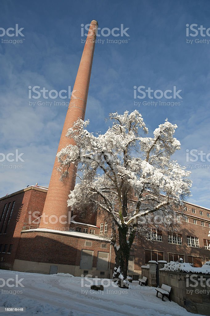 Plant at wintertime stock photo